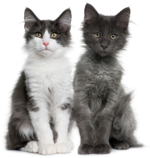 raw cat food cats are fussy eaters so variety freshness and warming ...
